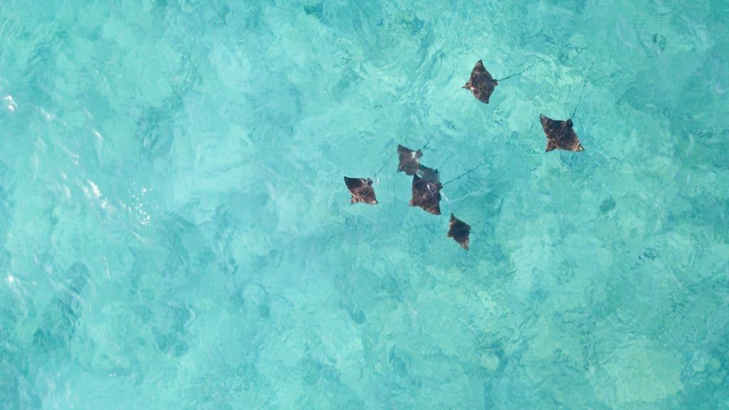 imagen seychellen laenderinformationen afrika freiwilligenarbeit artenschutz rochen drohen sabbatical natucate