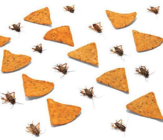 La Unión Europea está a punto de aprobar los insectos para el consumo humano