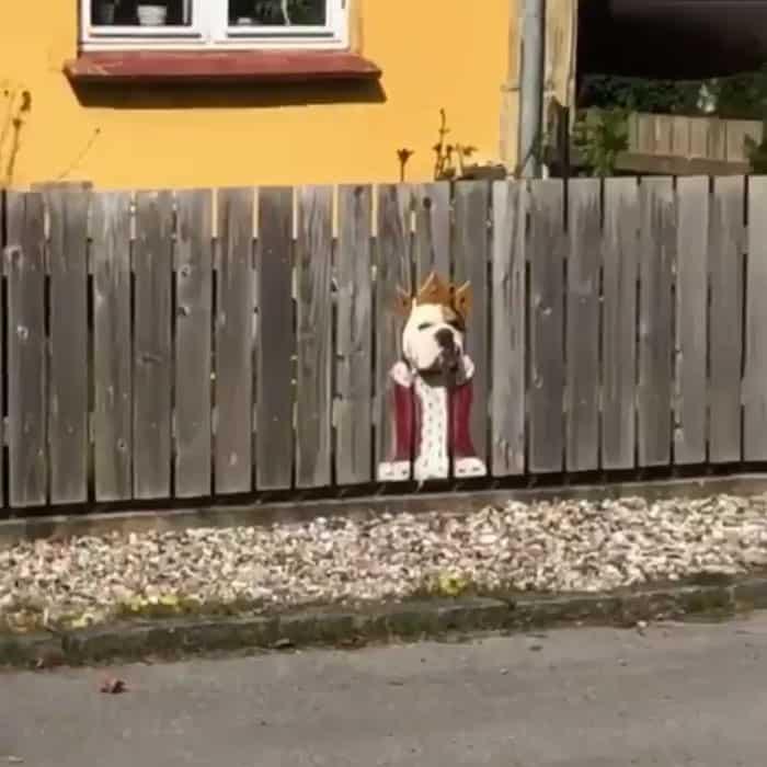 Pintaron la cerca para que las personas que pasaran por allí se divirtieran con sus perros, y fueron furor en internet