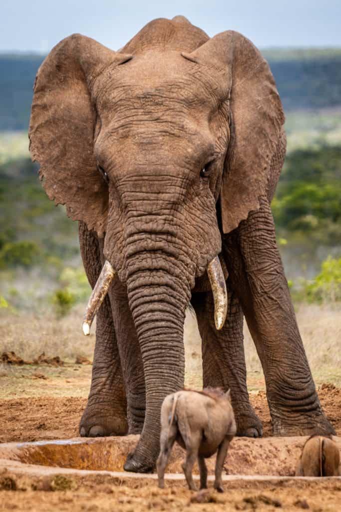 Esta es la increíble foto ganadora del Viewbugs Safari Wildlife Photo Contest