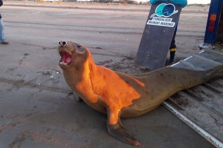 Fotógrafo captura por primera vez en Argentina al loro choroy, considerado como uno de los más inteligentes del mundo