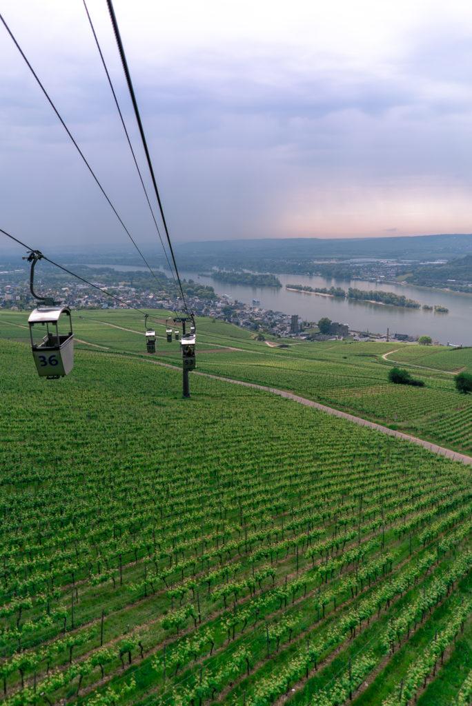 Imagen Intriper Rudesheim Am Rhein Vineyards 1