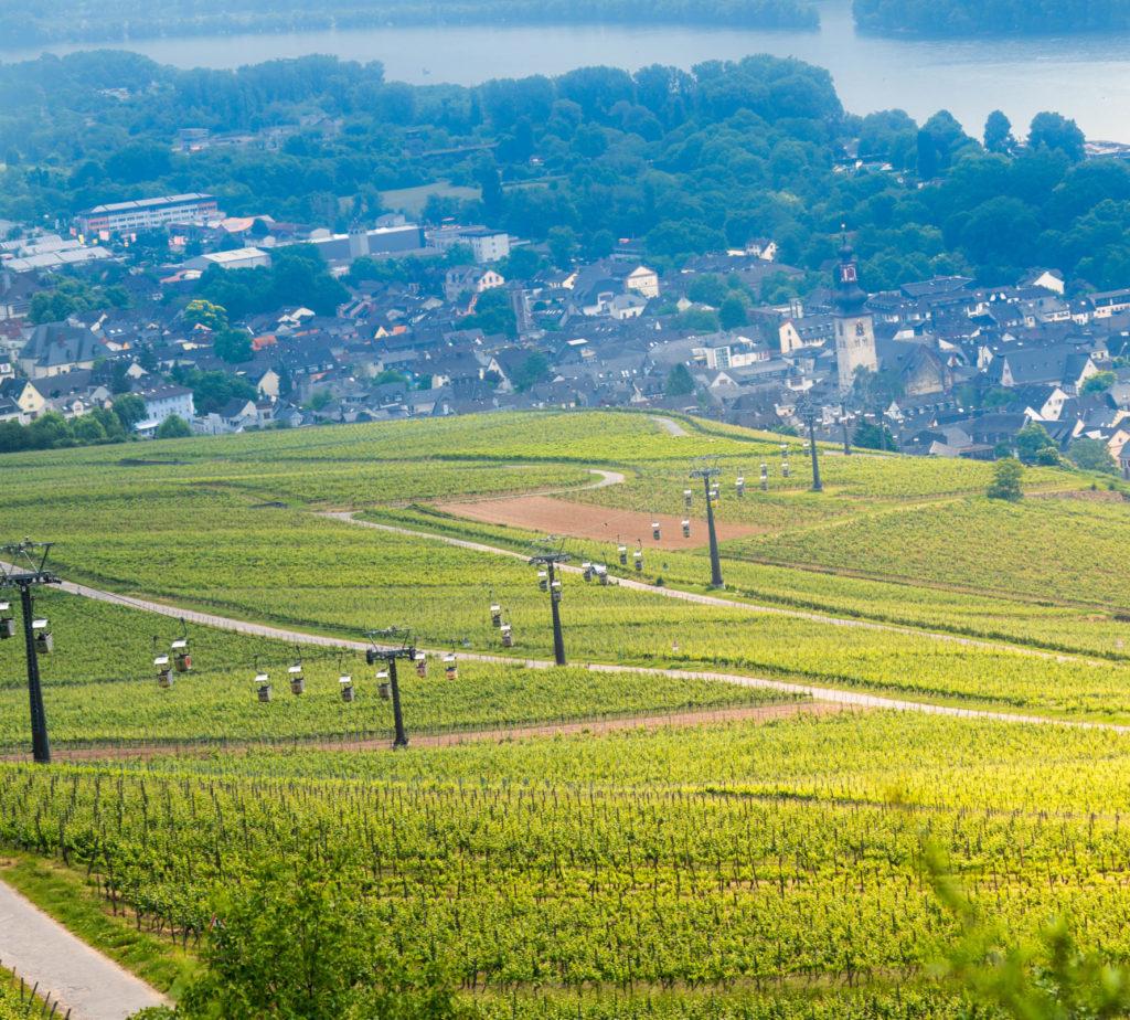 Imagen Intriper Rudesheim Am Rhein Vineyards 5 Scaled E1589995619136