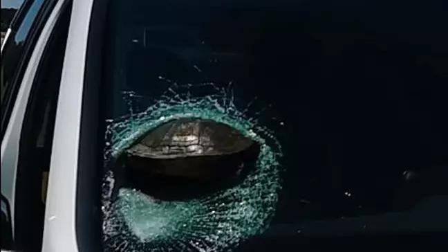 Iban manejando cuando de repente una tortuga se estrelló en su parabrisas