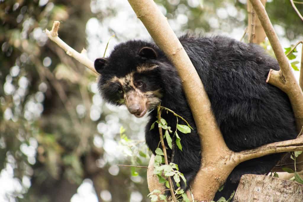 El Gobierno de Perú destina más de 1 millón de dólares a zoológicos en crisis por la pandemia