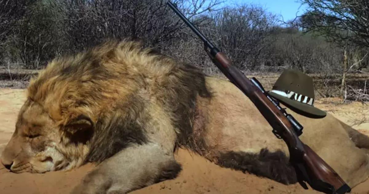 Lord Ashcroft on Wildlife
