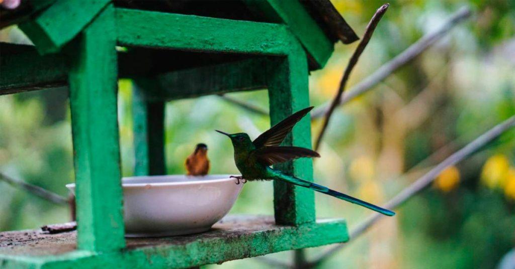 Senderismo en el Valle del Cocora: casa del colibrí