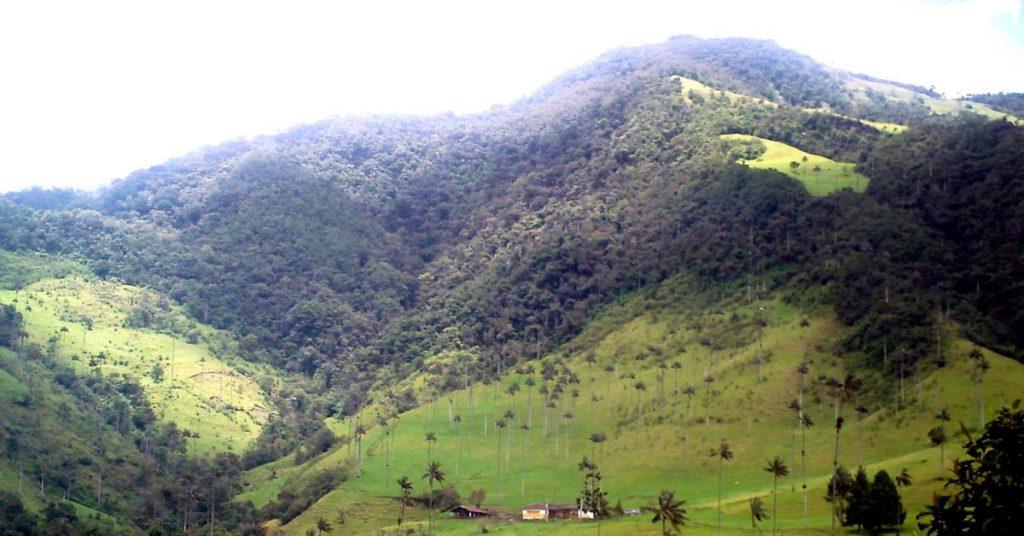 Senderismo en el Valle del Cocora: La montaña