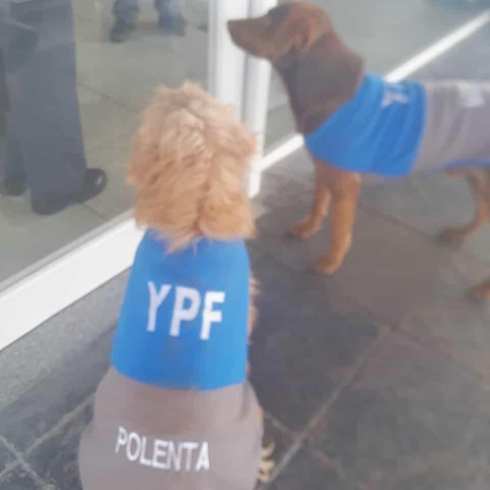 estación de servicio adopta perritos callejeros
