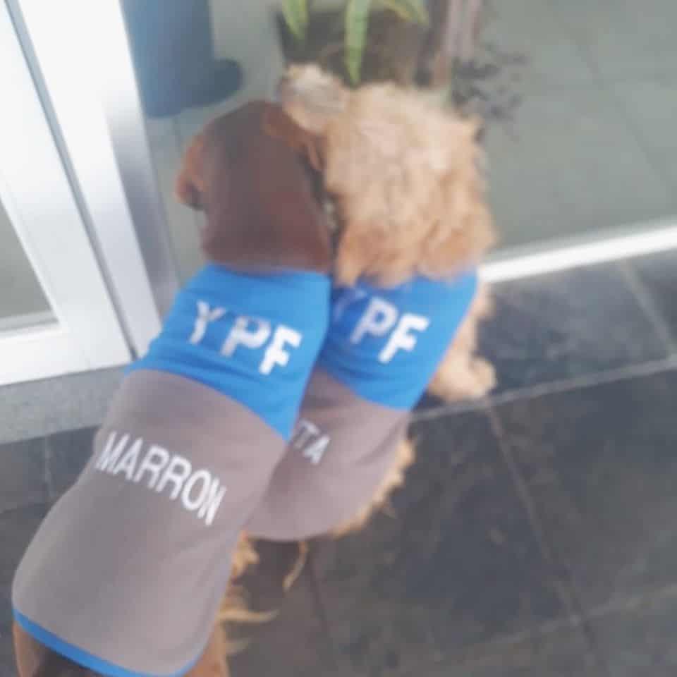 estación de servicio adopta dos perritos callejeros