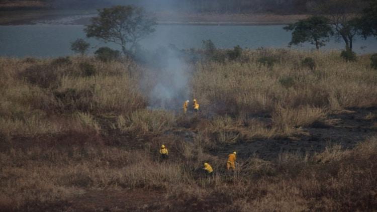 desastre ambiental en el Delta del Paraná ante el aumento de incendios en los bosques nativos