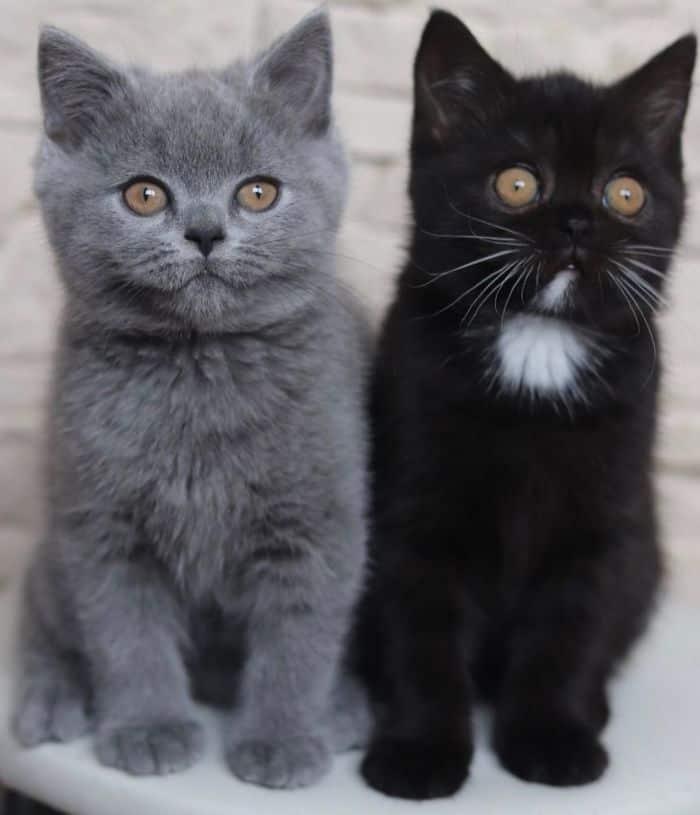 Este gatito con la cara dividida fue padre de 2 crías y cada una tiene uno de sus colores