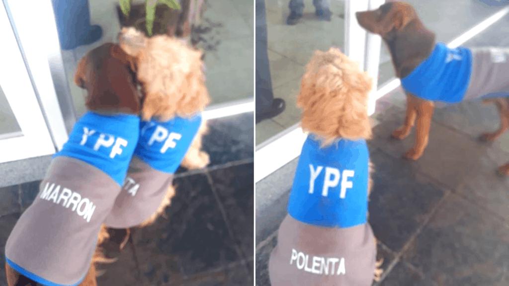 Furor: Una estación de servicio 'adoptó' dos perritos callejeros vistiéndolos con el mismo uniforme de trabajo de sus empleados