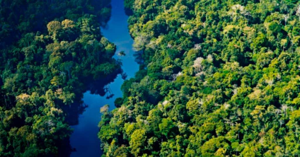 selva amazónica peruana