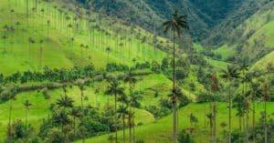 Senderismo en el Valle del Cocora