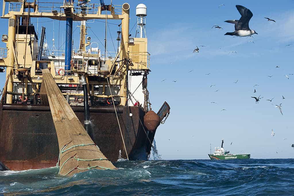 """Greenpeace alerta sobre el estado del Mar Argentino: """"Al borde del colapso entre pesqueros y petroleros"""""""