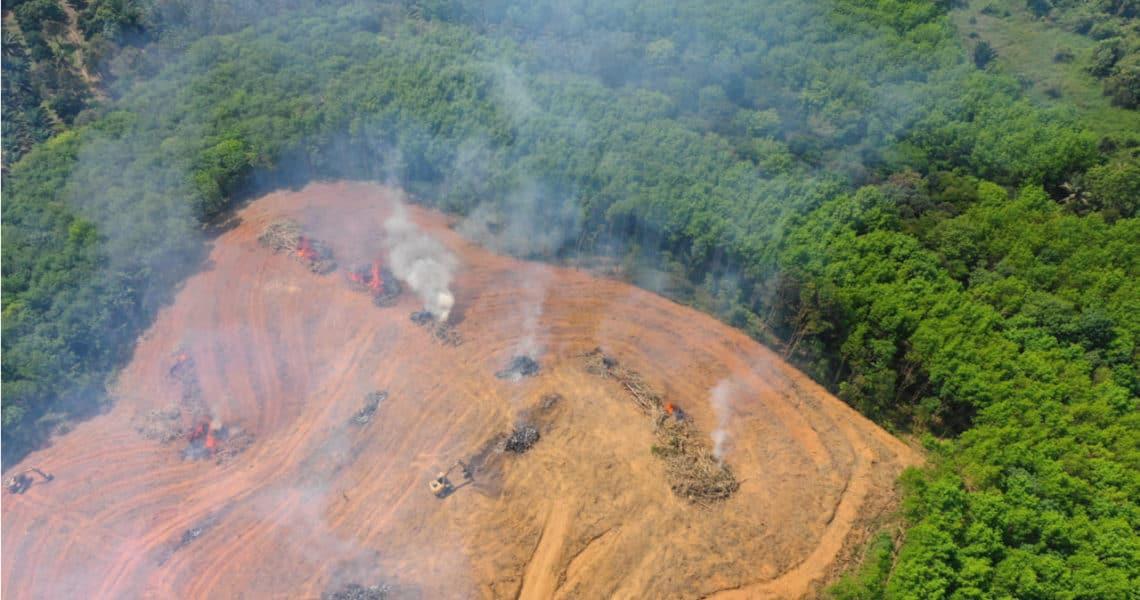 Deforestación-Amazonas-1140x600