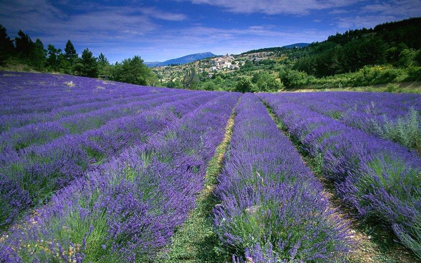 por qué visitar La Provenza en Francia