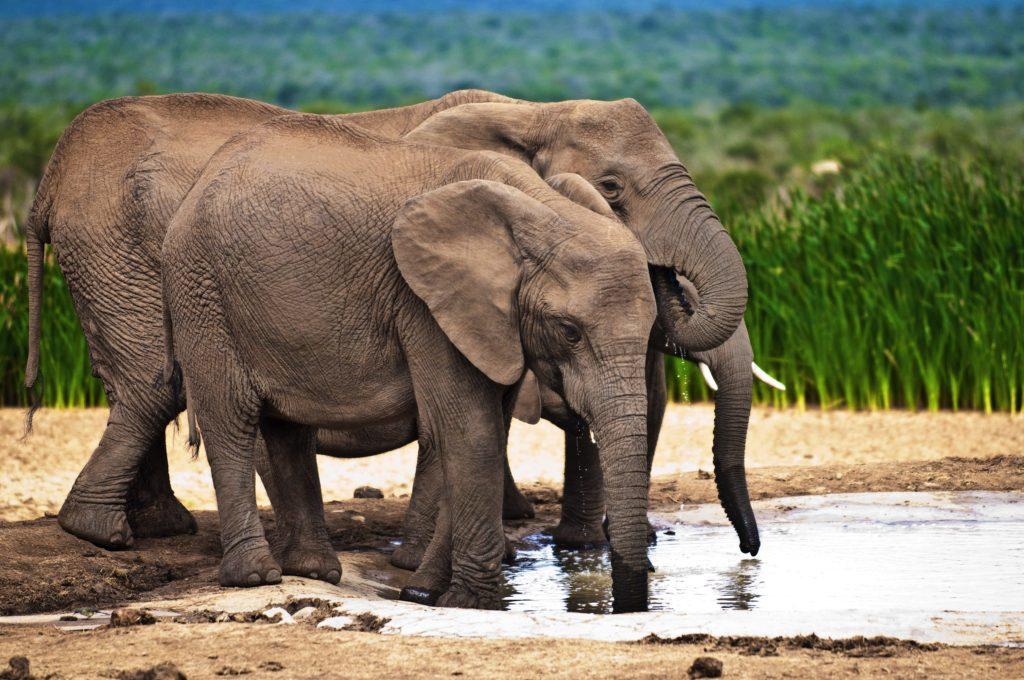 Imagen Elefantes2