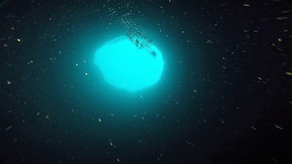 Mote Marine Laboratory via NOAA