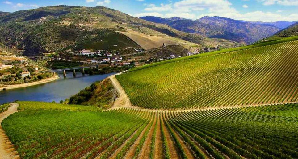 trenes temáticos para descubrir Castilla vinos de ribera del duero