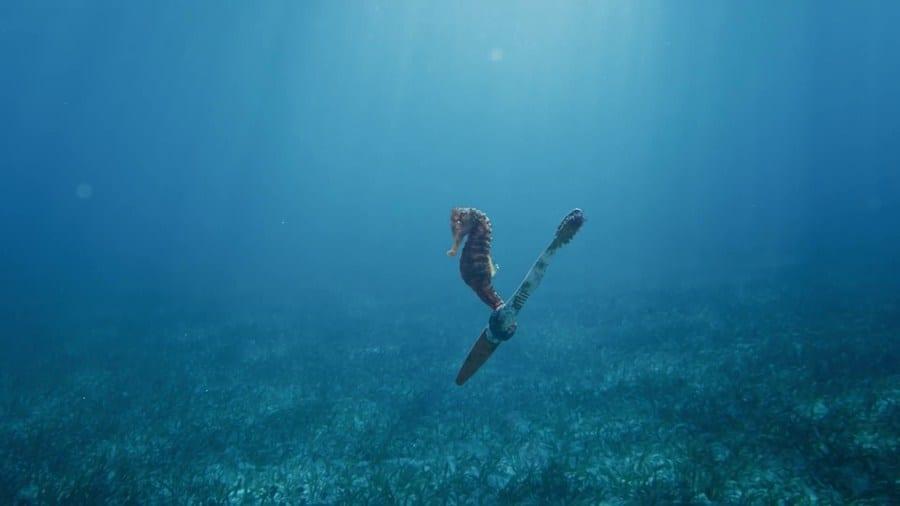 Habitantes Del Océano