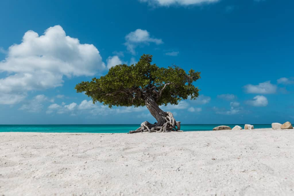 Viajar a Aruba Eagle Beach