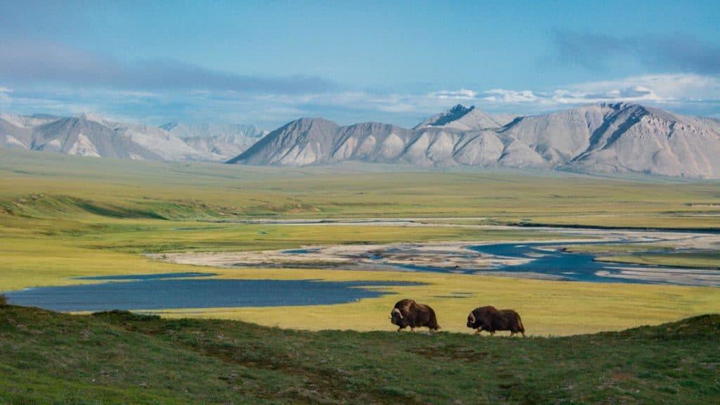 Estados Unidos habilita extracción de petróleo y gas en el Refugio Nacional de Vida Silvestre del Ártico, en el noreste de Alaska