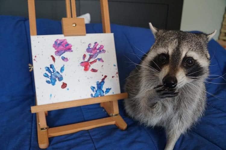 Mapaches crean obras de arte