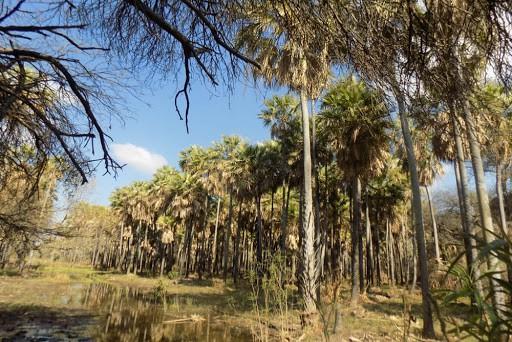 qué ver en Salta 14 lugares para explorar el costado mas natural de Salta 7