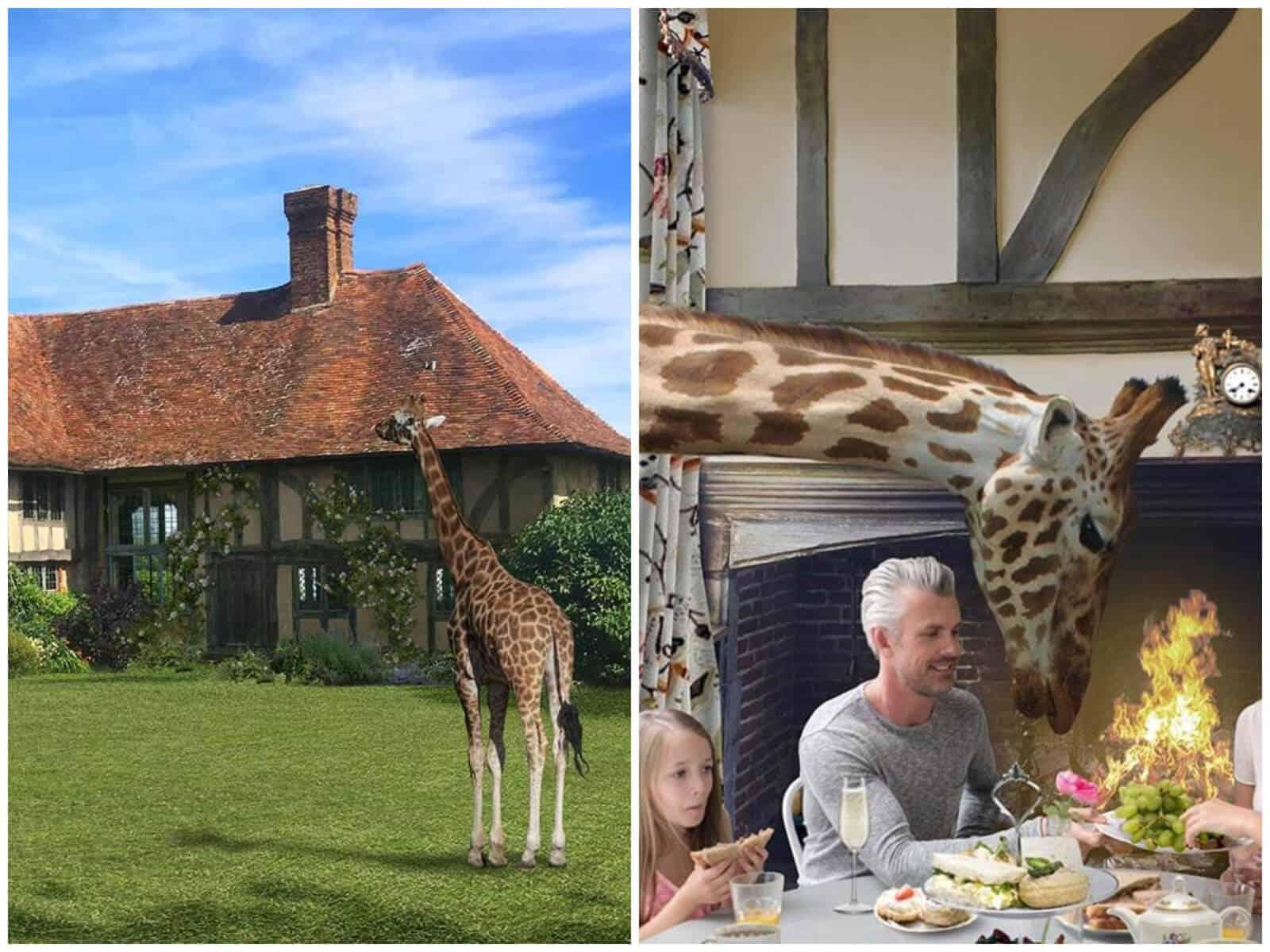 Giraffe-lodge (1)