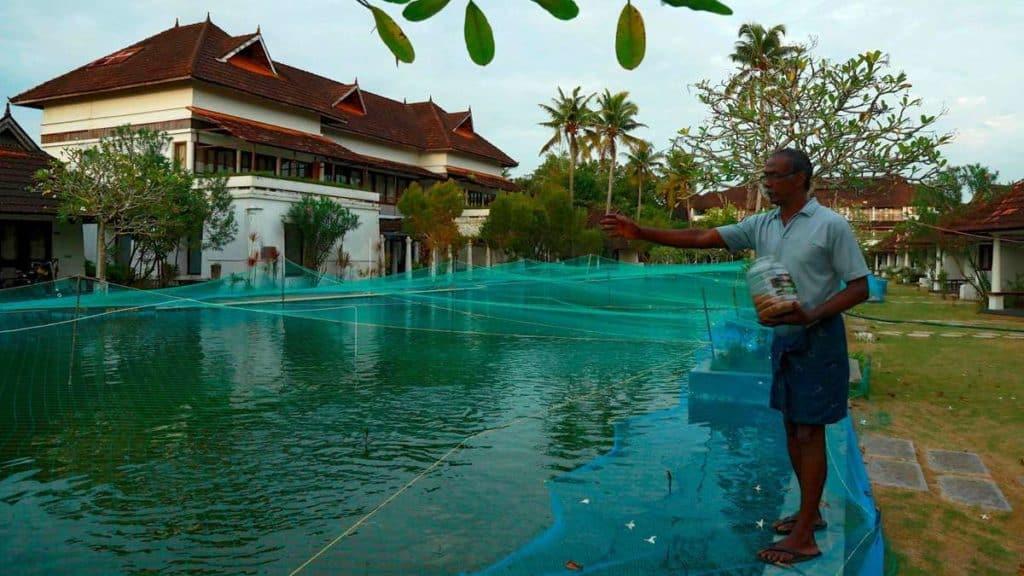 un resort de lujo en el sur de la India convirtió su piscina en un criadero de 16.000 peces