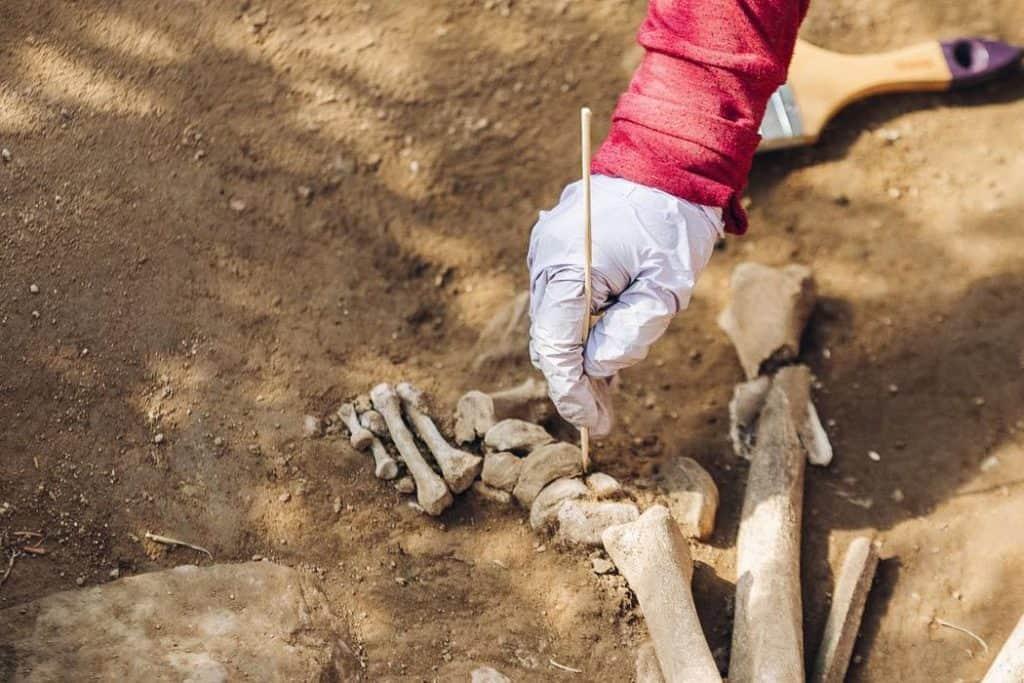 'familia' neolítica de 7000 años