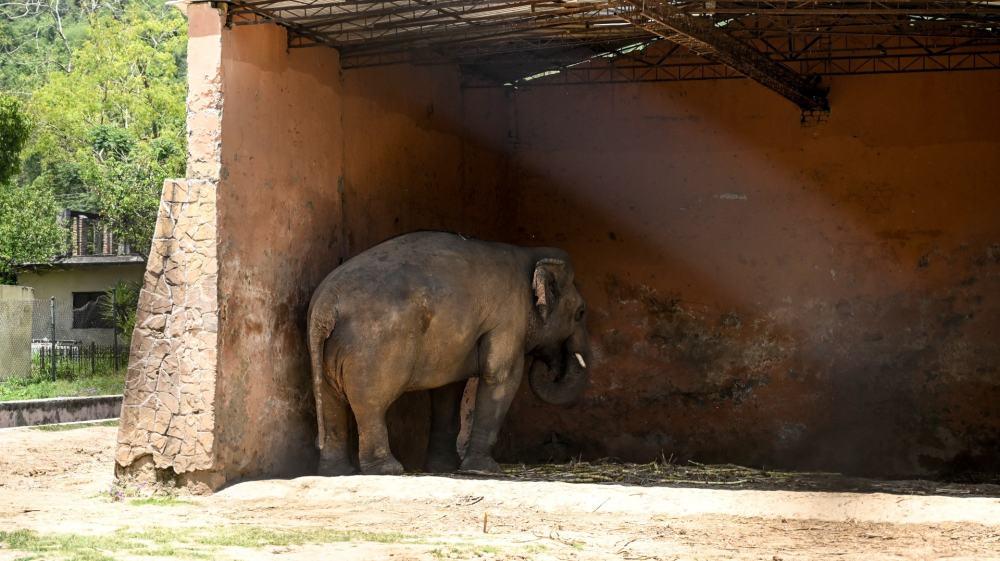 """El elefante """"más solitario del mundo"""" ha sido autorizado para pasar de un zoológico condenado a un santuario"""