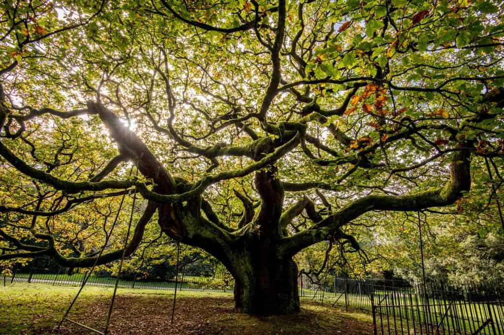 Inglaterra, Escocia y Gales quieren saber cuál es el árbol del 2020 y la decisión es del público