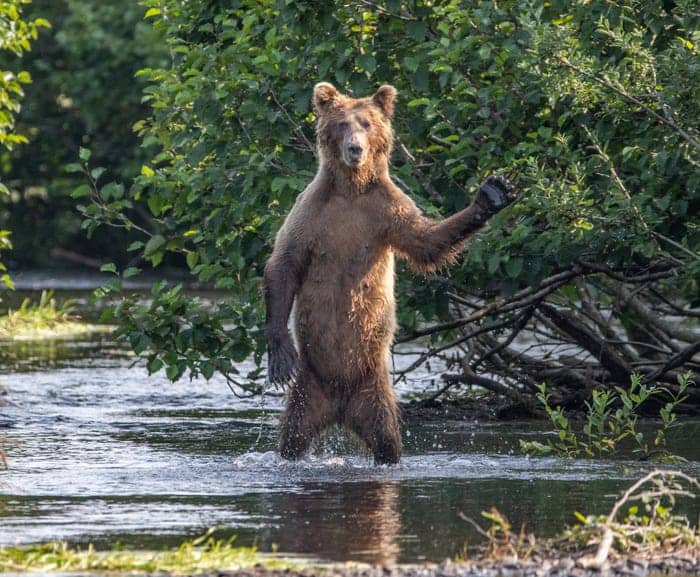 """Hi Y'all."" © Eric Fisher/Comedy Wildlife Photo Awards 2020"