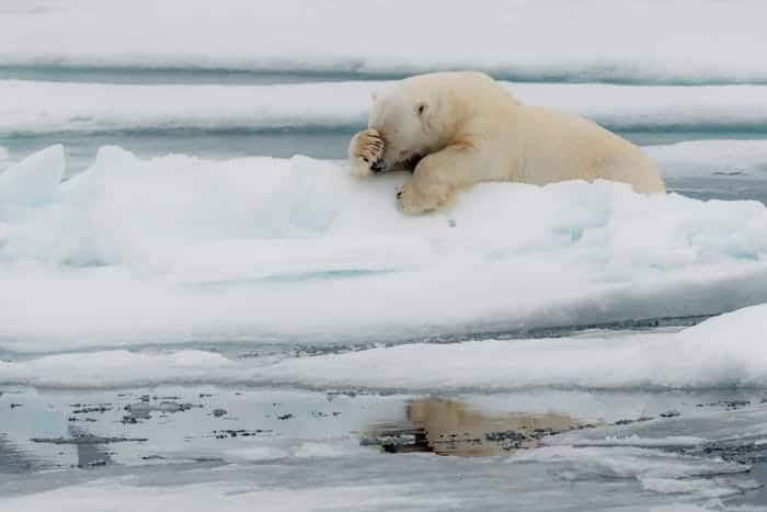 """Lamentation!"" © Jacques Poulard/Comedy Wildlife Photo Awards 2020"