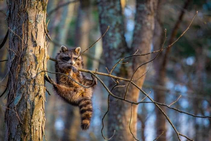 """Just Chillin'."" © Jill Neff/Comedy Wildlife Photo Awards 2020"