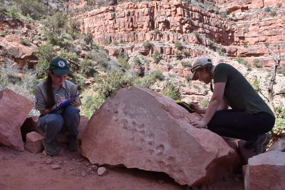 Encuentran huellas fósiles en el Gran Cañón, Estados Unidos, que podrían tener más de 300 millones de años