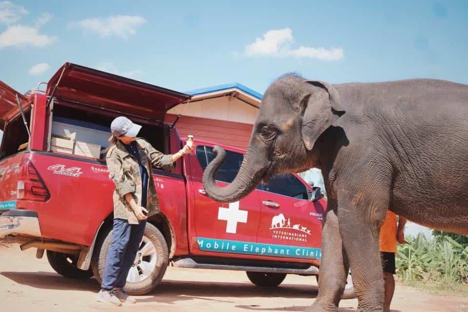 Con este proyecto podes hacer videollamada con un elefante y, al mismo tiempo, contribuir a su bienestar