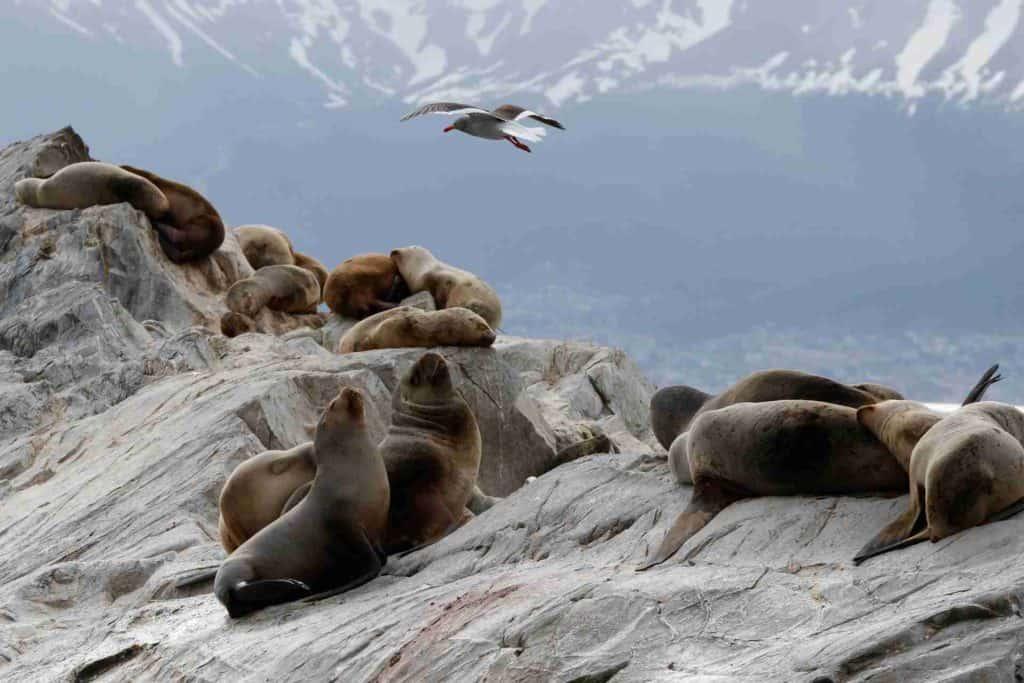 que ver en ushuaia isla de los lobos ushuaia
