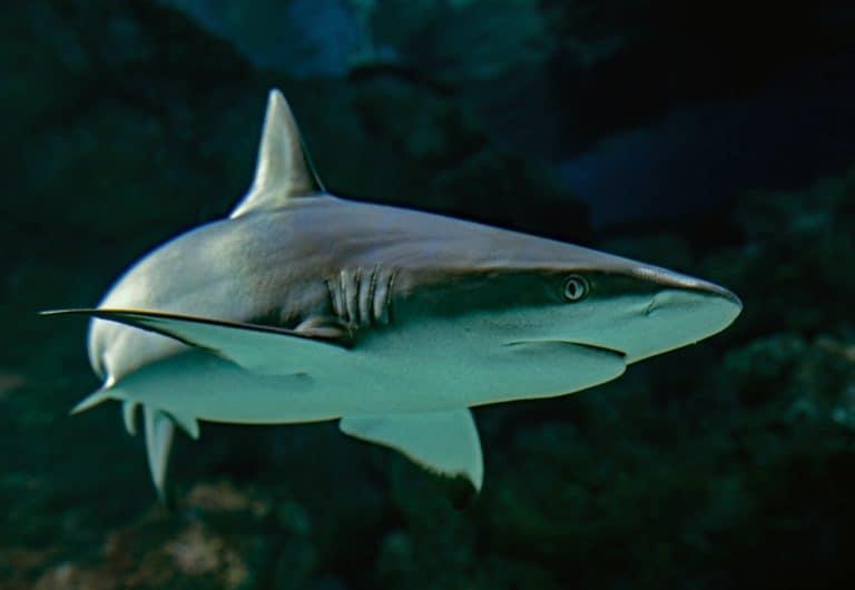 Una mujer saltó al agua a salvar a su marido inmediatamente después de ver que lo había atacado un tiburón