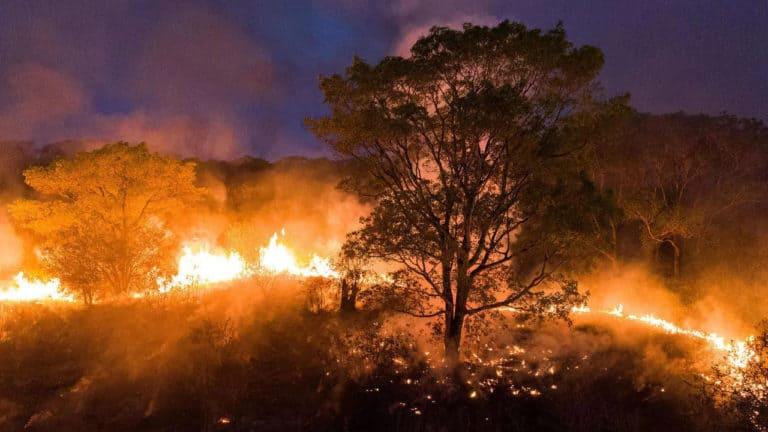 Brasil: el Pantanal atraviesa uno de los peores incendios de la historia y está destruyendo el mayor refugio de jaguares del mundo