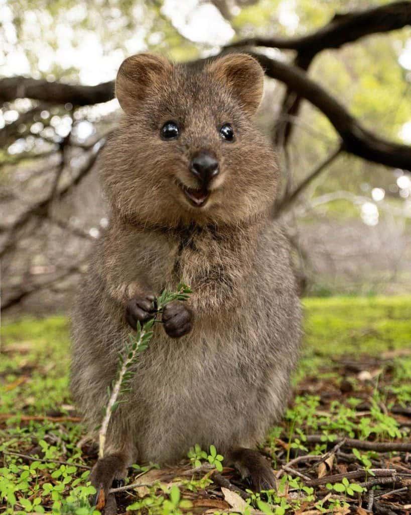 Un estudio asegura que mirar imágenes de animales tiernos puede reducir el estrés en un 50%
