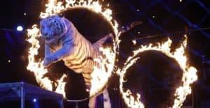 En Francia prohibirán el uso de animales silvestres en circos y parques marinos