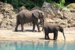 Estados Unidos: 30 elefantes que formaban parte de un circo serán incorporados a un refugio de vida silvestre