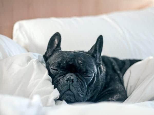Hoteles.com busca mascotas para contratar y que evalúen los hoteles que admiten mascotas como un 'crítico canino'