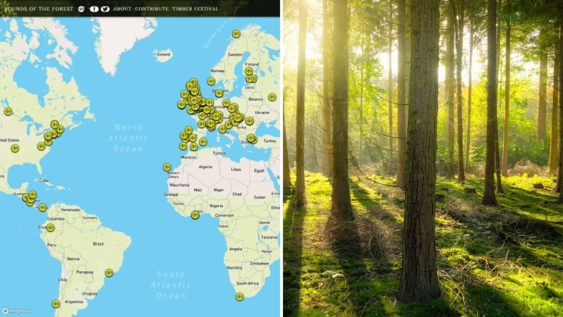 Sounds of the Forest: un mapa interactivo te permite escuchar sonidos de bosques de alrededor del mundo