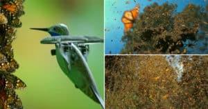 colibrí robótico