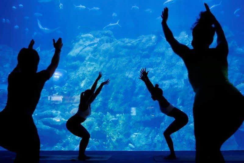 Ahora es posible tomar clases de yoga en un acuario de Hong Kong